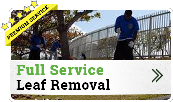 Full Service Leaf Removal
