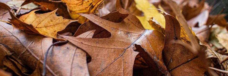 Leaf Removal: Curbside Pickup or Full Yard Cleanup