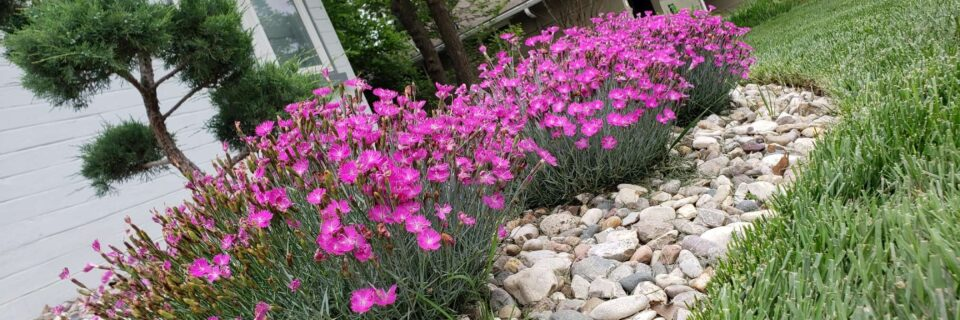 We create beautiful flower beds in Manhattan KS  GET A FREE ESTIMATE 785-236-1717